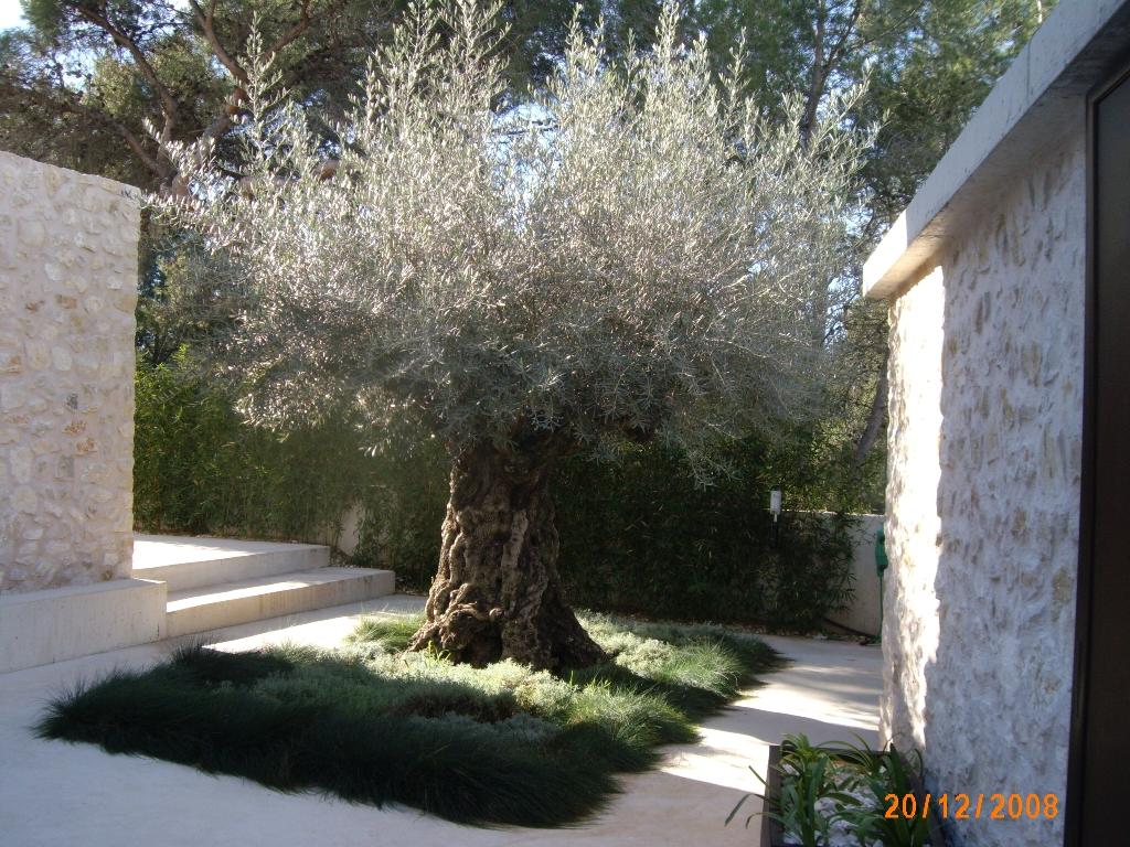 Mantenimiento de jardines valencia jardineria verde - Mantenimiento de jardines ...